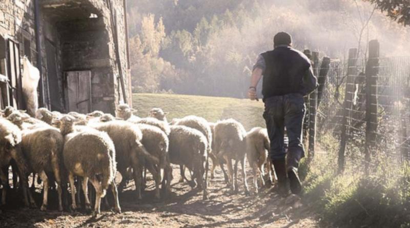Augustyn z Hippony: Jezus jest bramą owiec